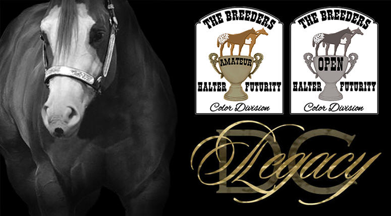 DC Legacy is now in the new color division of the Breeders Halter Futurity!