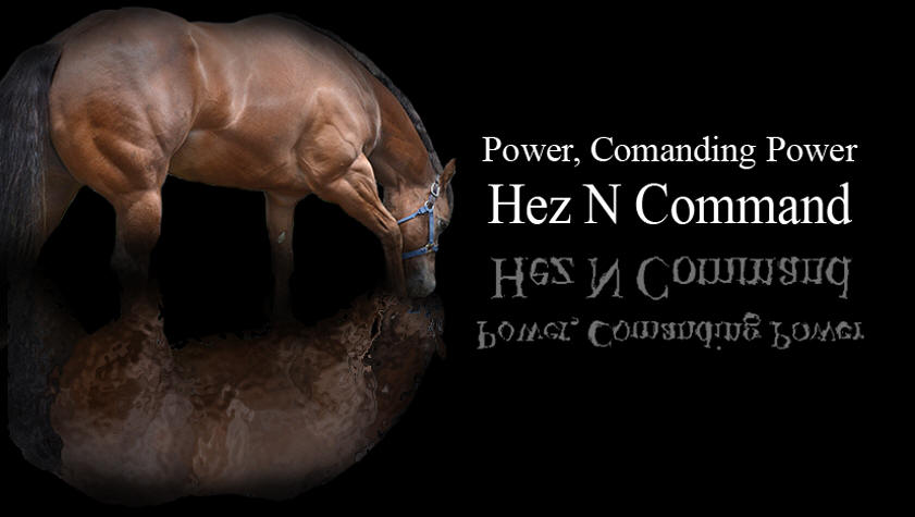 Hez N Comman, AQHA World Champion Stallion