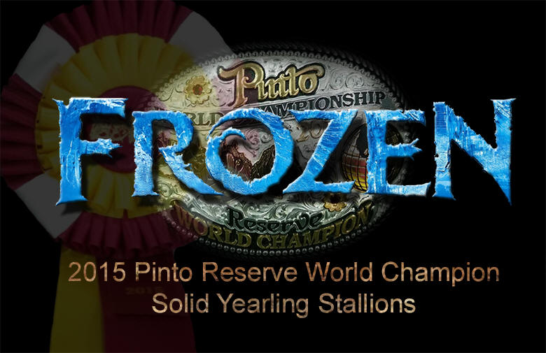 Frozen, AQHA Pinto Reserve World Champion