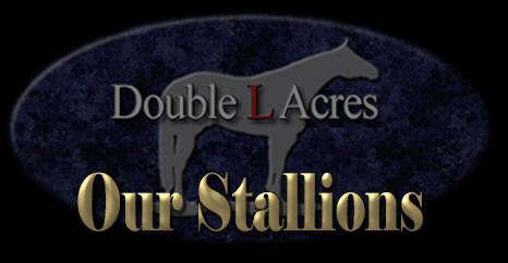 Our Stallions at Double L Acres