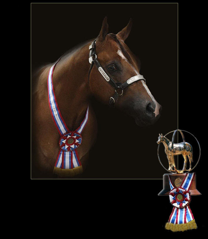 Hez N Command, AQHA World Champion